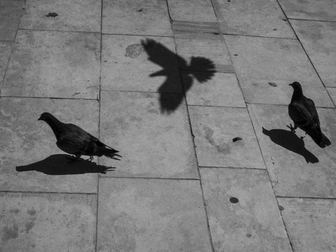Là-bas / Les pigeons maltais
