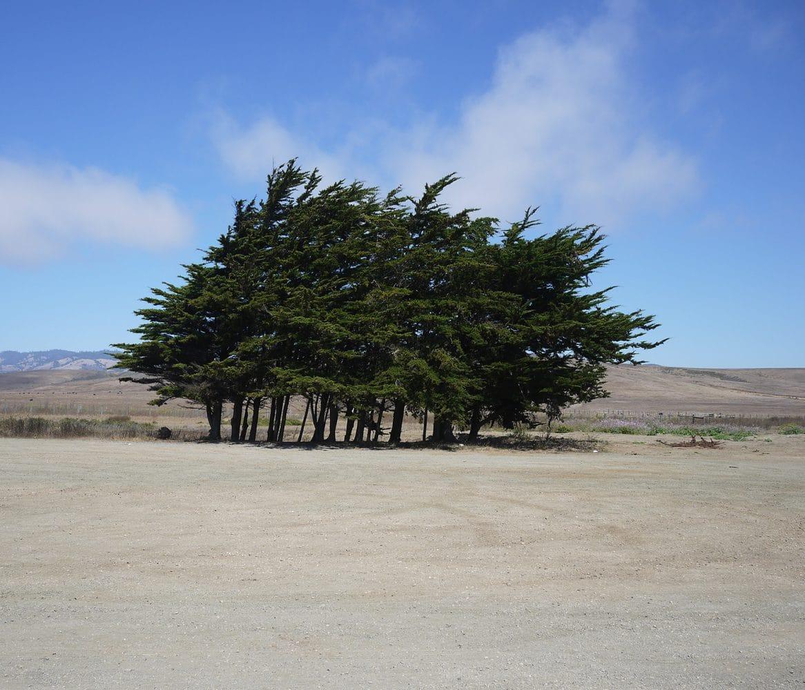 Là-bas / Bord de route californien